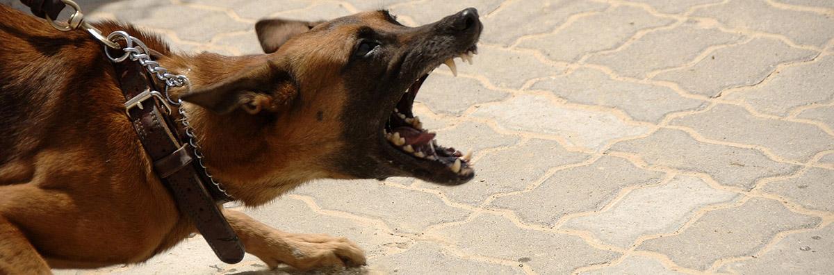 attorney in richmond va dog bite lawyer